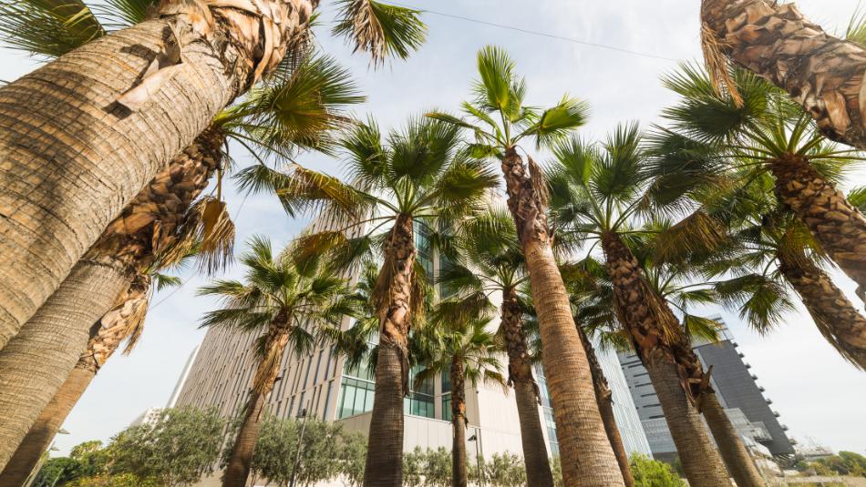 trees in LA